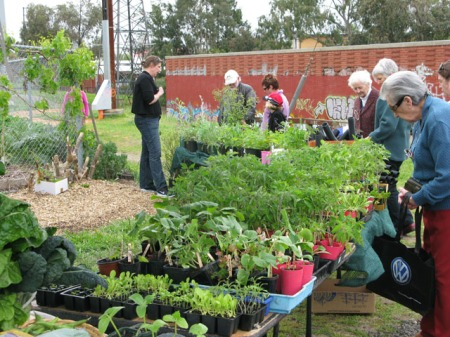openday09-seedlings2