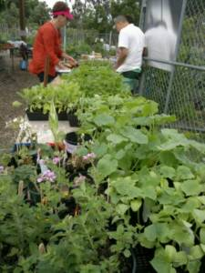 2013 Open Day - Seedlings stall 2