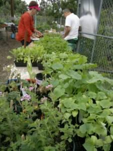 2013 Open Day - Seedlings stall 2