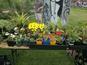 2013 Open Day - Seedlings stall