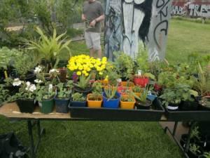 2013 Open Day - Seedlings stall