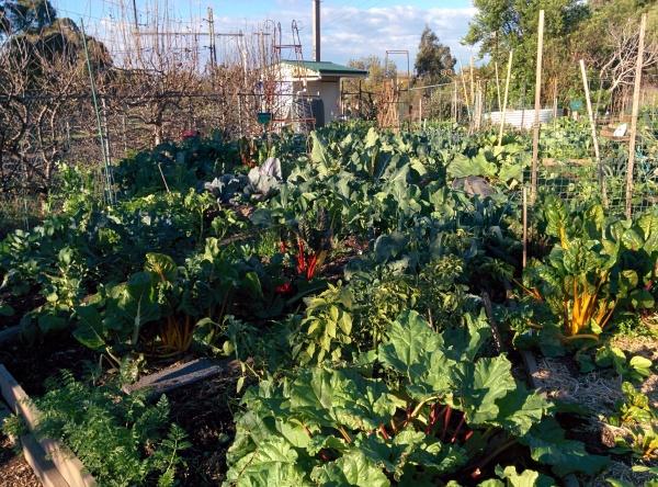 Garden Jul14