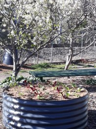 New circular bed and plum blossom