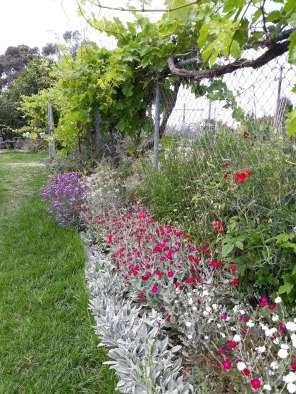 Bee-attracting plants by the gate